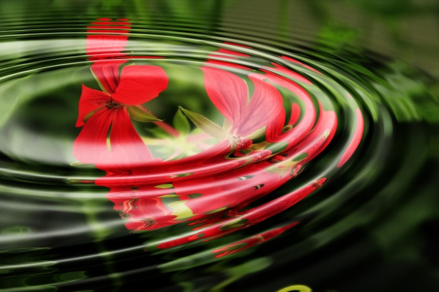 Geranium Waves Circles Circle Water Rings Wave